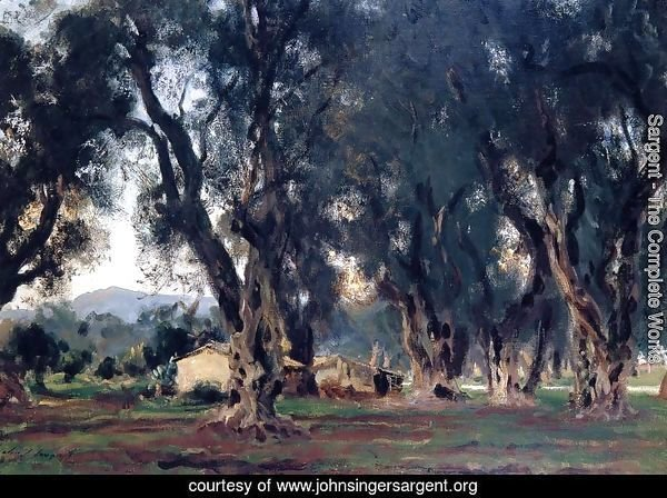 Olive Trees at Corfu