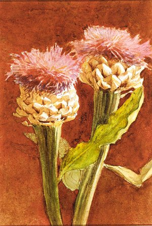 Sargent - Thistle